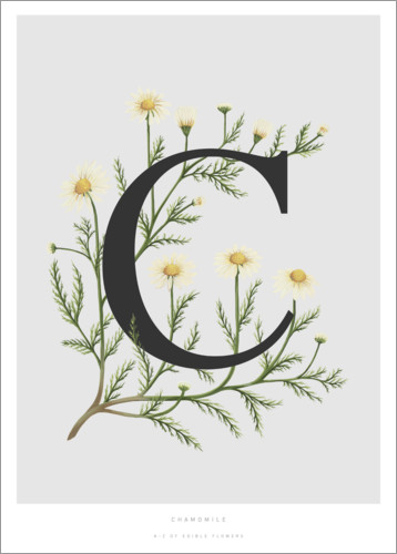 Poster Premium C is for Chamomile