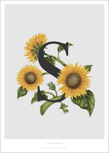 Poster Premium S is for Sunflower