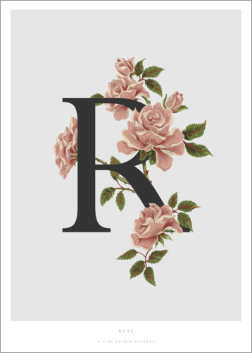 Poster Premium R is for Rose
