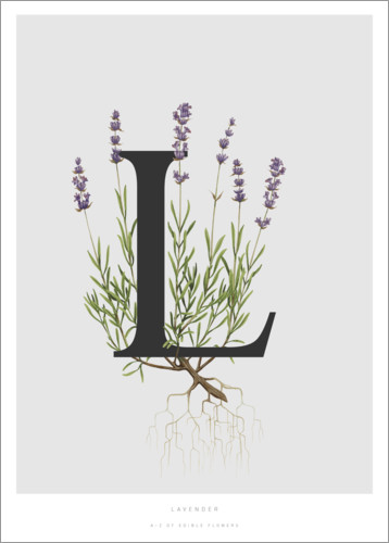 Poster Premium L is for Lavender