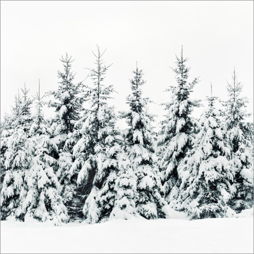 Poster Foresta d'inverno