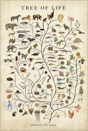 Stampa su alluminio  Tree of Life - Studio W