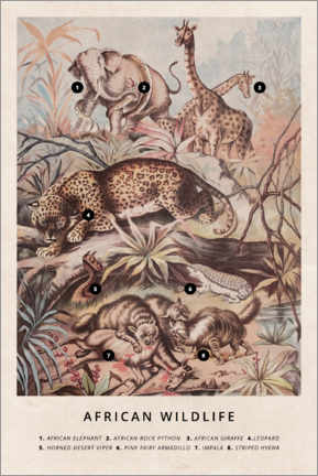 Poster Premium  Fauna selvatica africana (inglese) - Wunderkammer Collection