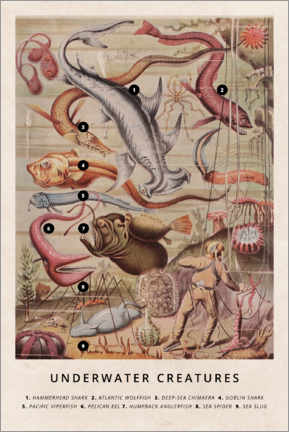 Stampa su tela  Creature sottomarine (inglese) - Wunderkammer Collection