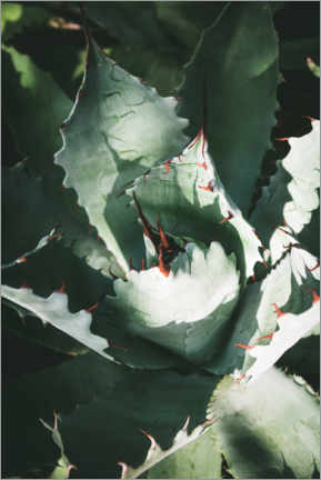 Poster Premium Agave d'argento
