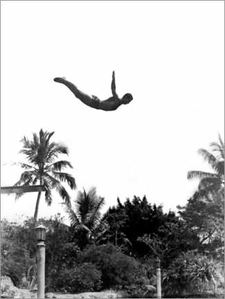 Poster Premium  Springboard diver over palm trees