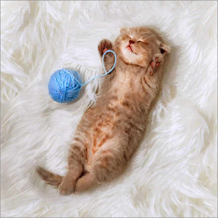 Poster Premium Kitten with a ball all of wool