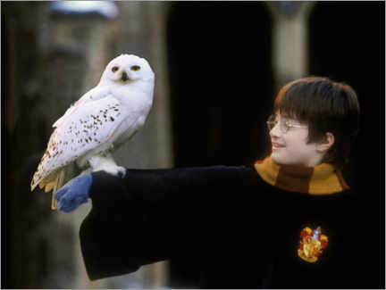 Stampa su legno  Harry Potter and the Sorcerer's Stone - Harry & Hedwig