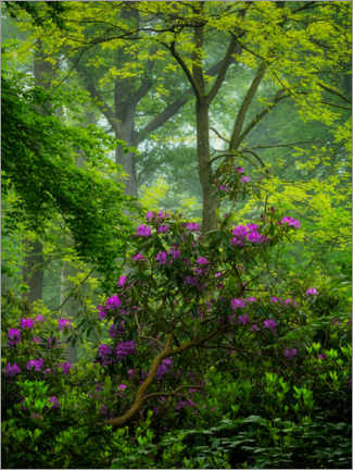 Adesivo murale  Rhododendrons in a green forest - Jos Pannekoek