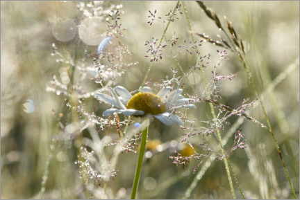 Stampa su tela  Early morning in the meadow - GUGIGEI