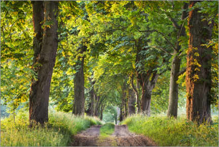 Stampa su PVC  Avenue of trees in spring at sunrise - The Wandering Soul