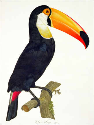 Poster Premium  Toucan No.2 - Jacques Barraband