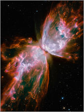 Stampa su plexi-alluminio  The Butterfly Nebula - Stocktrek Images