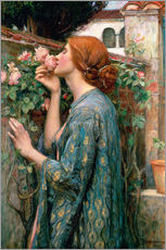 Stampa su plexi-alluminio  Lo spirito della rosa - John William Waterhouse