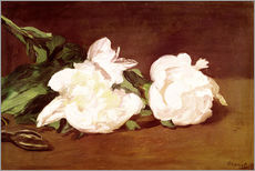 Stampa su plexi-alluminio  Branch of White Peonies and Secateurs - Edouard Manet