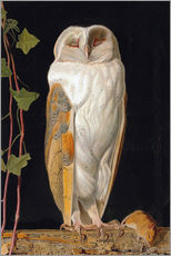 Stampa su plexi-alluminio  The White Owl - William James Webbe