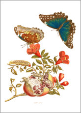Tela  Pomegranate and Blue Morpho - Maria Sibylla Merian
