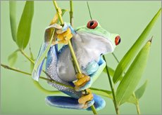 Adesivo murale  Red-eyed tree frog - Linda Wright