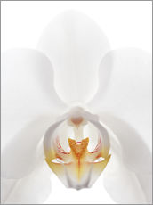 Stampa su plexi-alluminio  in the throat of the Orchid - GAVIN KINGCOME