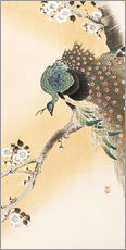 Stampa su plexi-alluminio  A peacock in a cherry tree crown - Ohara Koson