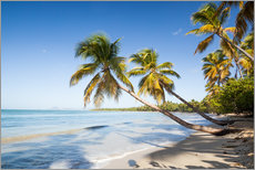 Adesivo murale  Famous Les Salines tropical beach with palm trees, Martinique, Caribbean - Matteo Colombo