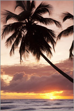 Stampa su plexi-alluminio  Tropical sunset, Bridgetown, Barbados, West Indies, Caribbean, Central America - Angelo Cavalli