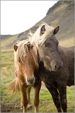 Adesivo murale  Horses, South Iceland, Northern Europe