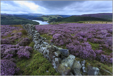 Adesivo murale  Heather covered Bamford Moor and dry stone wall - Eleanor Scriven