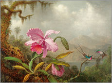 Stampa su plexi-alluminio  Cattleya Orchid and Three Brazilian Hummingbirds - Martin Johnson Heade