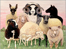 Stampa su plexi-alluminio  several sheeps - Pat Scott