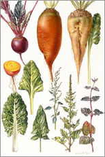 Adesivo murale  Beetroot and other vegetables - Elizabeth Rice