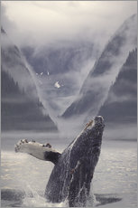 Adesivi murali  Humpback whale during emerge - Ron Sanford