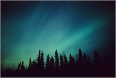 Adesivo murale  Northern Lights over a spruce forest - Greg Hensel