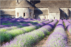 Adesivo murale  Famous Senanque abbey with its lavender field, Provence, France - Matteo Colombo
