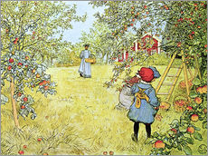 Stampa su plexi-alluminio  The Apple Harvest - Carl Larsson