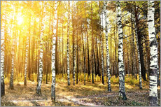 Adesivo murale  birch trees in a autumn forest