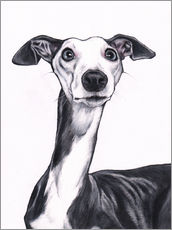 Jim Griffiths - Whippet, Blue and white