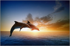 Adesivi murali  Dolphins in the sunset