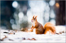 Adesivo murale  Squirrel looking for its nut