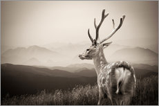 Adesivi murali  Stag in the mountains