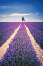 Stampa su plexi-alluminio  Lavender field with tree in Provence, France