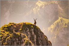 Stampa su plexi-alluminio  Capricorn in the Alps - Michael Helmer