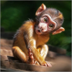 Adesivi murali  Baby Monkey - Photoplace Creative