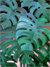 Adesivi murali  Monstera Love in Teal and Emerald Green - Micklyn Le Feuvre