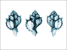 Adesivo murale  Shells, coloured X-ray
