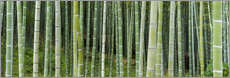 Adesivo murale  Green bamboo forest in Kyoto, Japan - Jan Christopher Becke