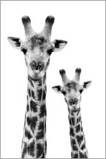 Stampa su plexi-alluminio  Safari Profile Collection - Portrait of Giraffe and Baby White Edition IV - Philippe HUGONNARD