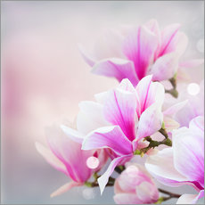 Stampa su plexi-alluminio  Magnolia flowers on bokeh background