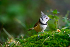 Stampa su plexi-alluminio  Cute tit standing on the forest ground - Peter Wey