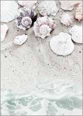Stampa su plexi-alluminio  Sea Beach with Shells